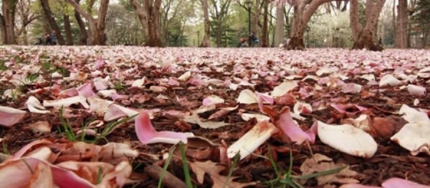 fallen-leaves1